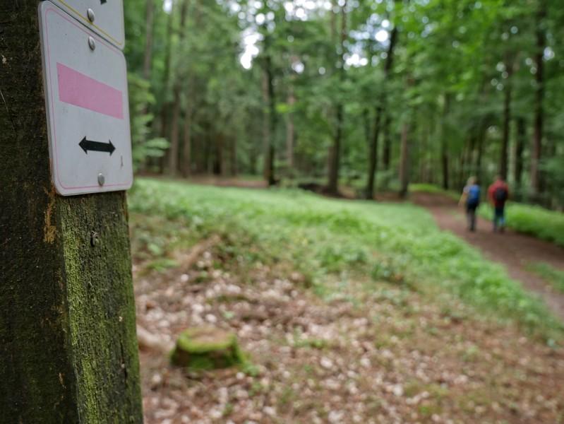 Die Wanderwege auf dem Stemweder Berg sind vorbildlich beschildert und gut in Schuss.