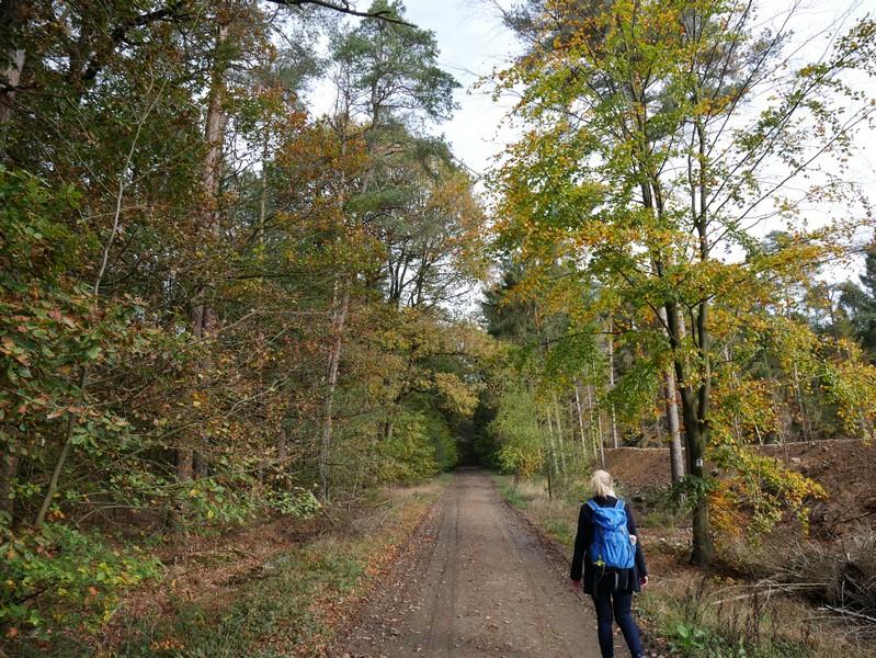 Schnurgerade verläuft der Zuweg zum TERRA.track Kettelsberg und führt uns auch vorbei am Tonabbaugebiet.