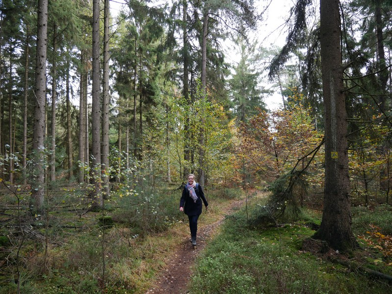 Immer wieder begegnen uns auch diese kleinen, idyllischen Waldpfade, die besonders viel Freude bereiten.