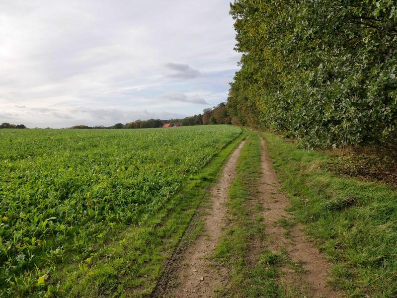 Wald- und Feldwege wechseln sich im nächsten Abschnitt auf dem TERRA.track Kettelsberg ab.