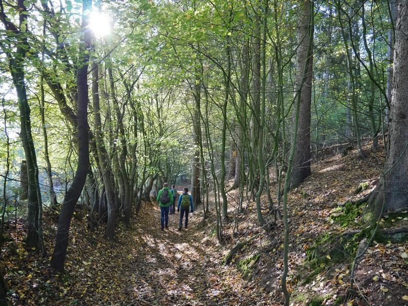 Die letzten hundert Meter auf dem Weg zu den Saurierspuren von Barkhausen