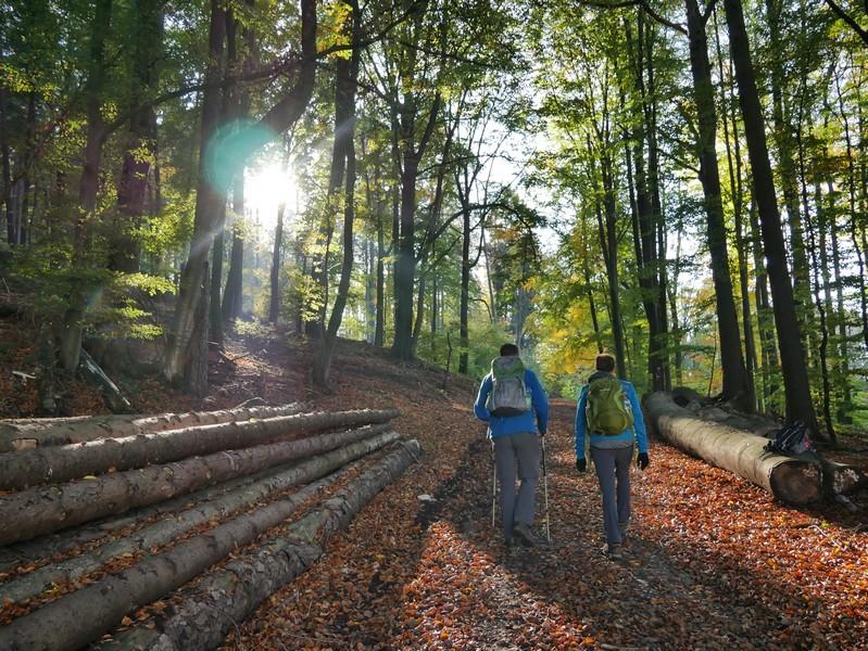 Breite, aber sehr lauschige Wanderwege führen uns über den Kamm des Wiehengebriges.