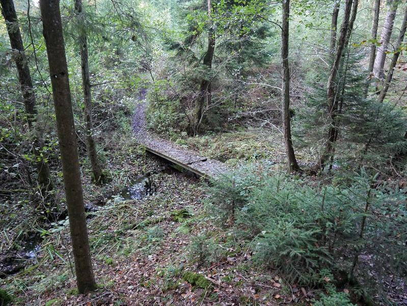 Direkt hinter der Gaststätte gelangen wir über ein Feld schon wieder in den Wald.