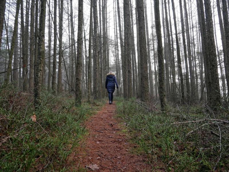Durch einen dichten Wald führt uns der M7 weiter bis zur Tongrube.