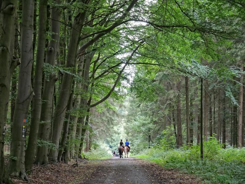 Hübsche Waldwege erwarten uns wenig später auf dem Gattberg.