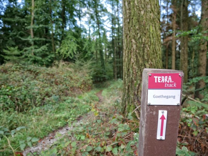 Bestens markiert führt uns der TERRA.track Goethegang einmal über den Hausberg Bad Essens, den Born.
