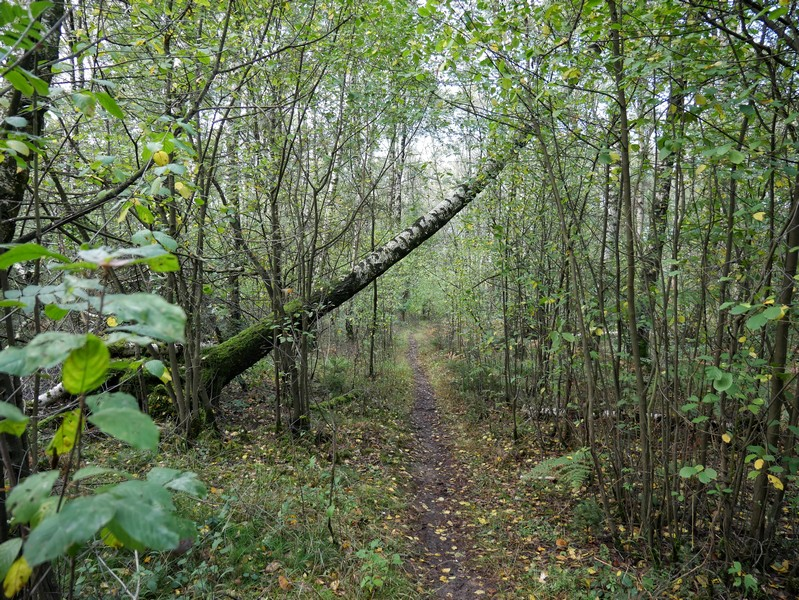Schmale und breitere Wege wechseln sich bei unserem Abstieg auf dem TERRA.track Goethegang ab.