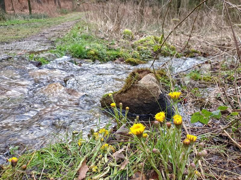 Sprudelndes Wasser mitten auf dem Weg - das erleben wir im Osnabrücker Land ja auch nicht alle Tage!