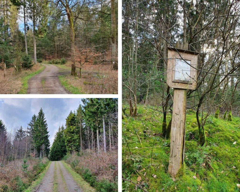 Auch ein etwas älterer Waldlehrpfad begleitet uns auf unserer Tour über den Steinberg.