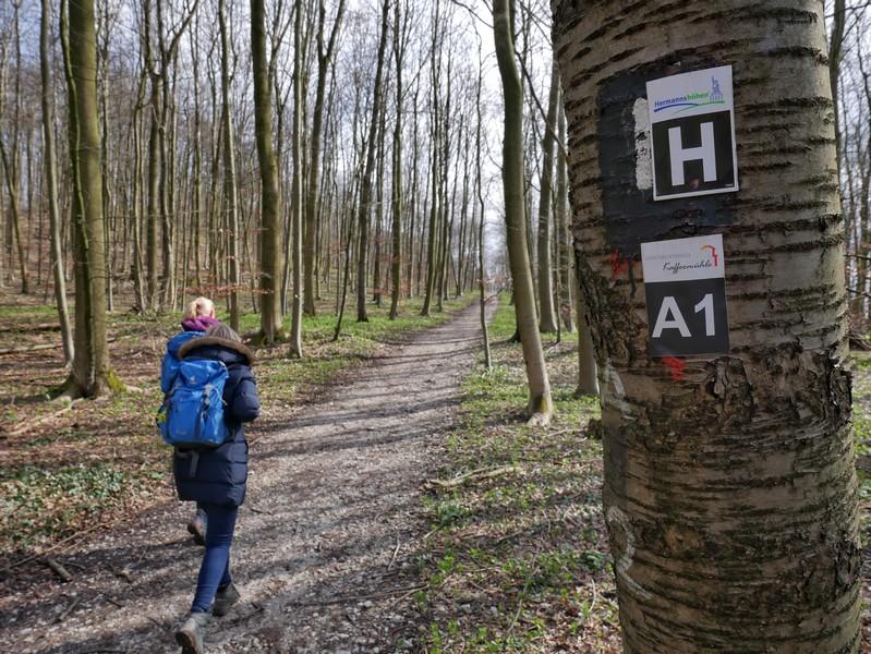 Zunächst folgen wir dem Hermannsweg.