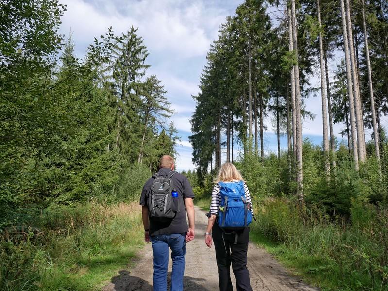 Trotz Wald bleiben die Wege weitgehend sonnig.