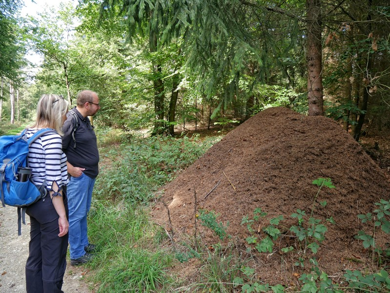 Einige gewaltige Ameisenberge können wir am Wegesrand bestaunen. Denn auch an einem Ameisenlehrpfad kommen wir vorbei.