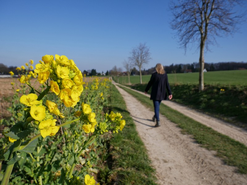 Zwischen Feldern geht es zurück nach Mettingen.