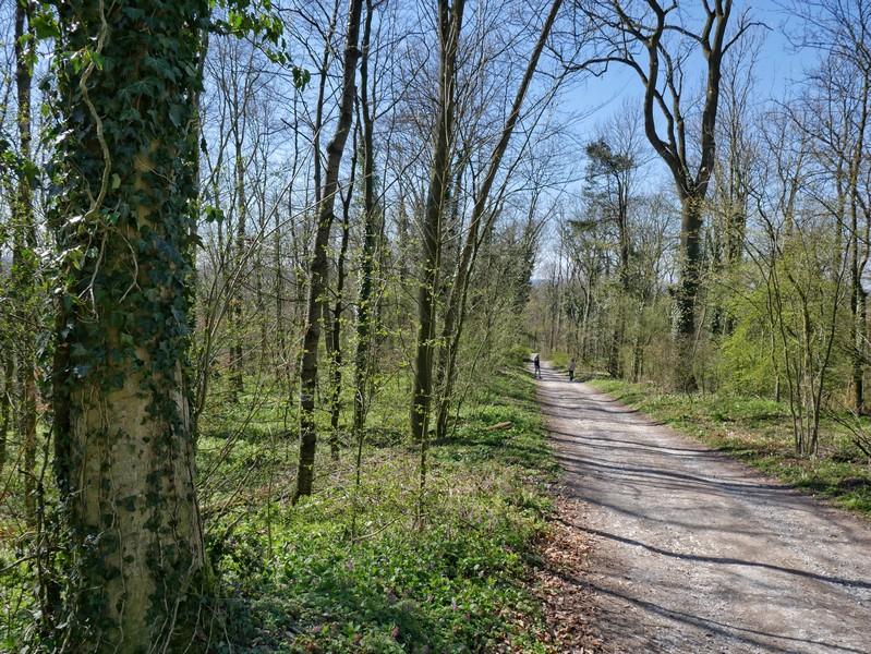 Von der Burg geht es bergab ein paar letzte Meter gemeinsam mit dem Hermannsweg.