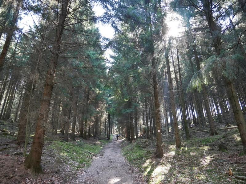 Dann zieht es uns auf dem Ahornweg wieder in den Wald und nun auch stetig bergauf.