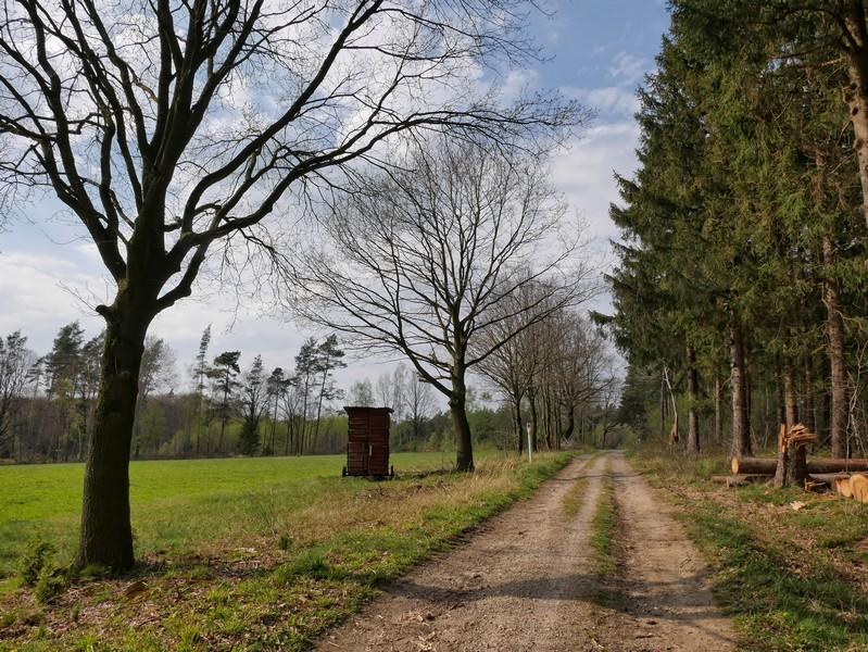 Felder zur Linken, Wald zur Rechten - dieser Blick prägt den TERRA.track Ruller Bruch über weite Teile.