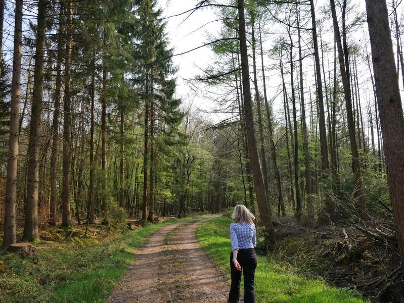 Ein kurzes Stück geht es nochmal durch den Wald.