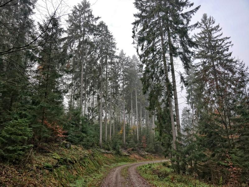 Bei herbstlichem Wetter und leichtem Nebel bekommt der Nadelwald eine ganz eigentümliche Atmosphäre...