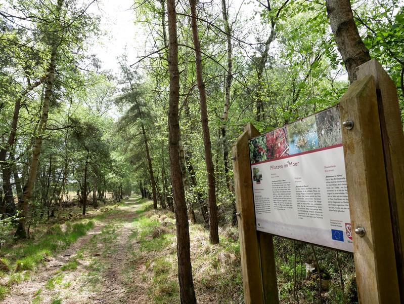 Informationen zu Flora und Fauna liefert der TERRA.track Hahlener Moorpfad gleich mit.