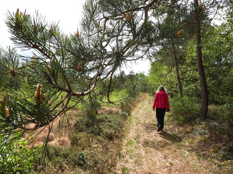 Nadelhölzer sehen wir im von Birken dominierten Moor eher selten.