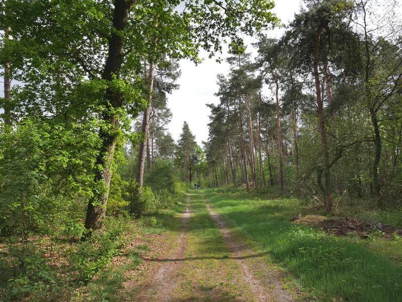 Nach diesem hübschen Waldabschnitt erreichen wir den Wacholderhain.