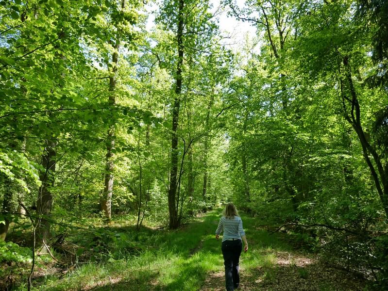 Idyllische, sehr ruhige Waldwege schließen sich an den Feldabschnitt an.