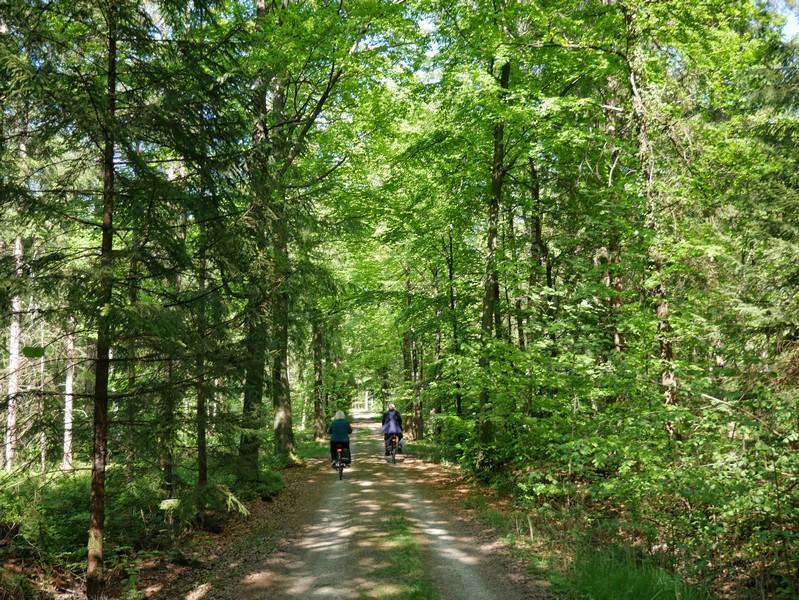 Auf breiten Waldwegen führt uns der TERRA.track Fürstenauer Patt wieder zurück ins Siedlungsgebiet der Gemeinde.