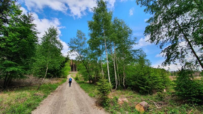 Ein zweites Mal führt uns der Holzweg über den teuto-Kamm und bleibt sich bei der Weggestaltung dabei treu.