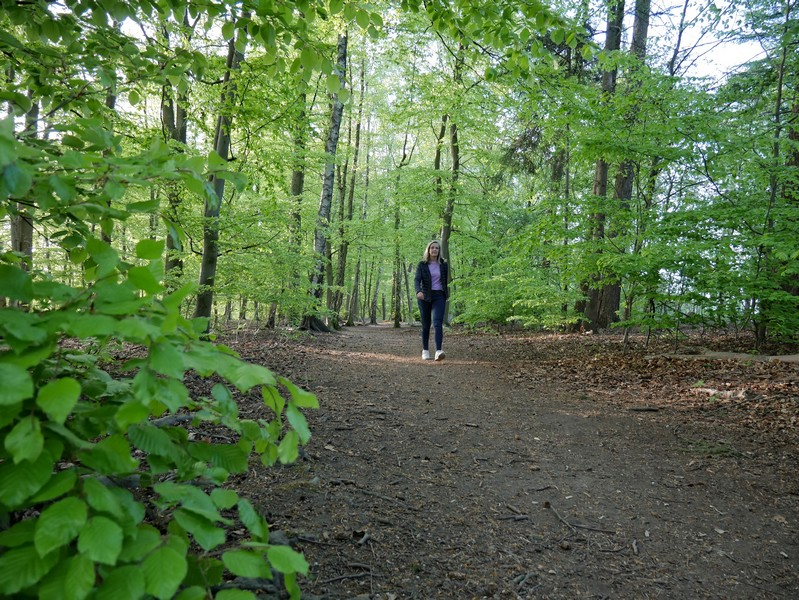 Teil breiten, teils schmalen Waldwegen folgt unser TERRA.track Richtstättenweg als nächstes.