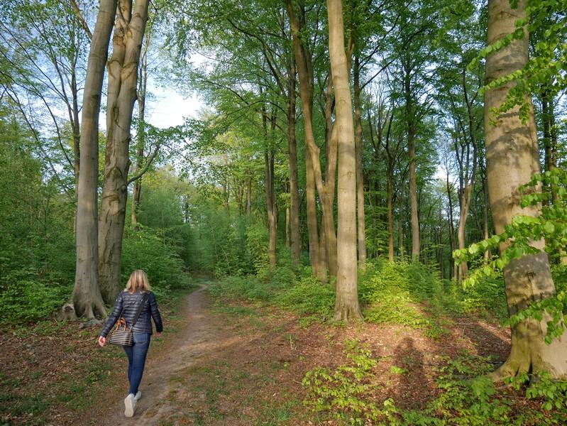 Gleich danach führt uns der TERRA.track Richtstättenweg wieder durch den Buchenwald.