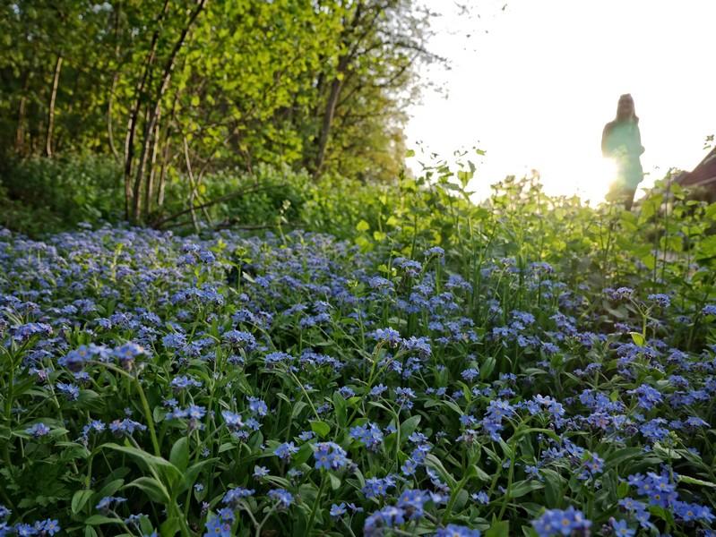 Die Abzweigung zur Richtstätte Belmer Sunden können wir leicht verpassen. Also genau genommen haben WIR sie sogar verpasst. Wir waren exakt an der Kreuzung zu beschäftigt damit, schöne Blumenbilder zu machen...