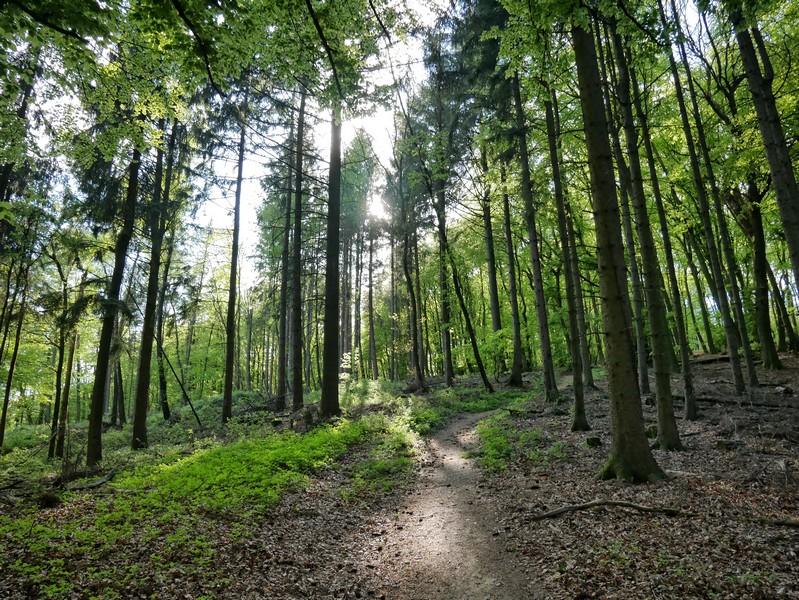 Ein hübscher kleiner Pfad führt uns recht steil bergauf zum Luisenturmweg Borgholzhausen.