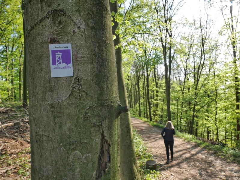 Die weiß-violette Ausschilderung auf dem Luisenturmweg Borgholzhausen ist durchgehend zu verlässig.