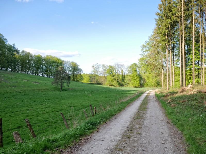 Nun führt uns der Luisenturmweg Borgholzhausen durch das Schweizer Tal.