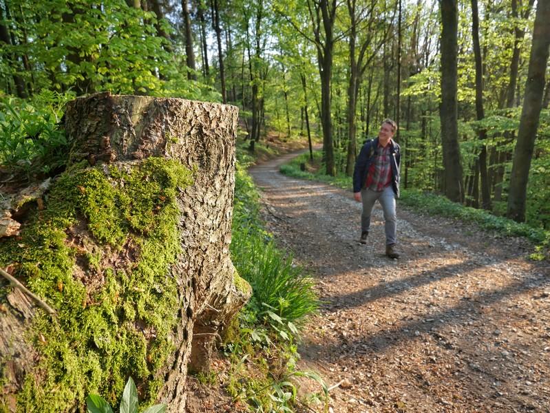 Ruhige, idyllische Waldwege prägen fast auf der gesamten Strecke das Bild auf dem Luisenturmweg Borgholzhausen. Trotzdem bleiben sie abwechslungsreich.