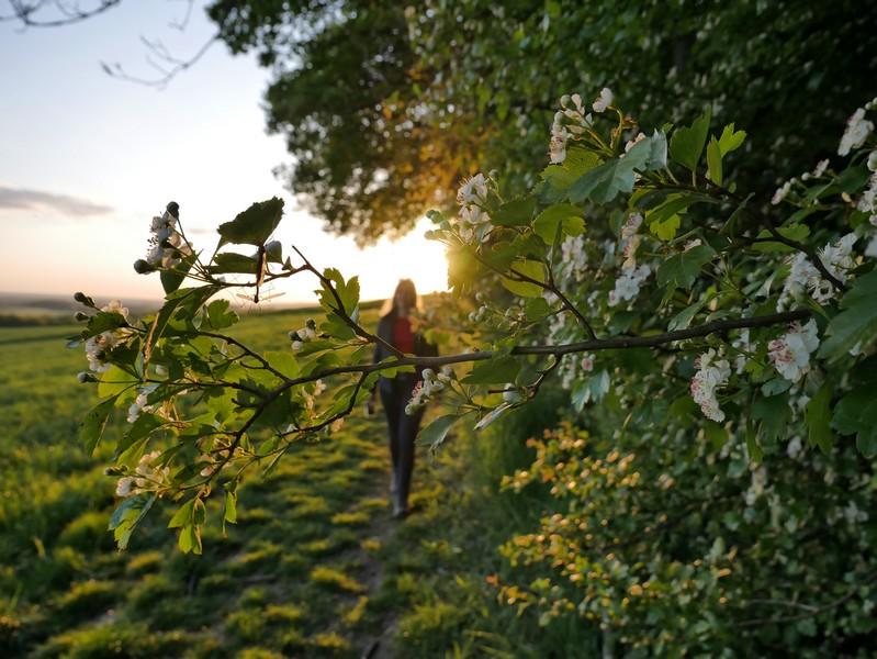 Entlang der grünen Wiesen setzen wir am Waldrand unsere Tour auf dem Luisenturmweg Borgholzhausen fort.