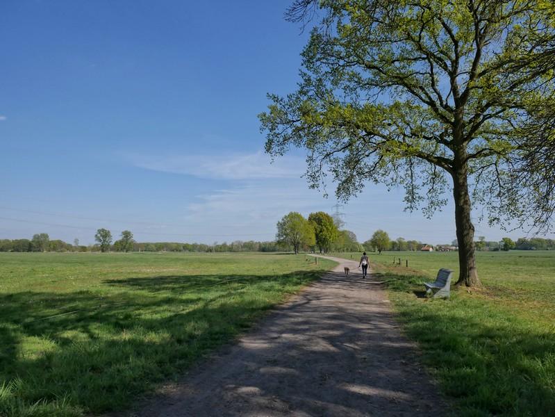 Weite grüne Wiesen - wir erreichen die Düsterdieker Niederung auf unserem Teutoschleifchen Schachselwiesen.