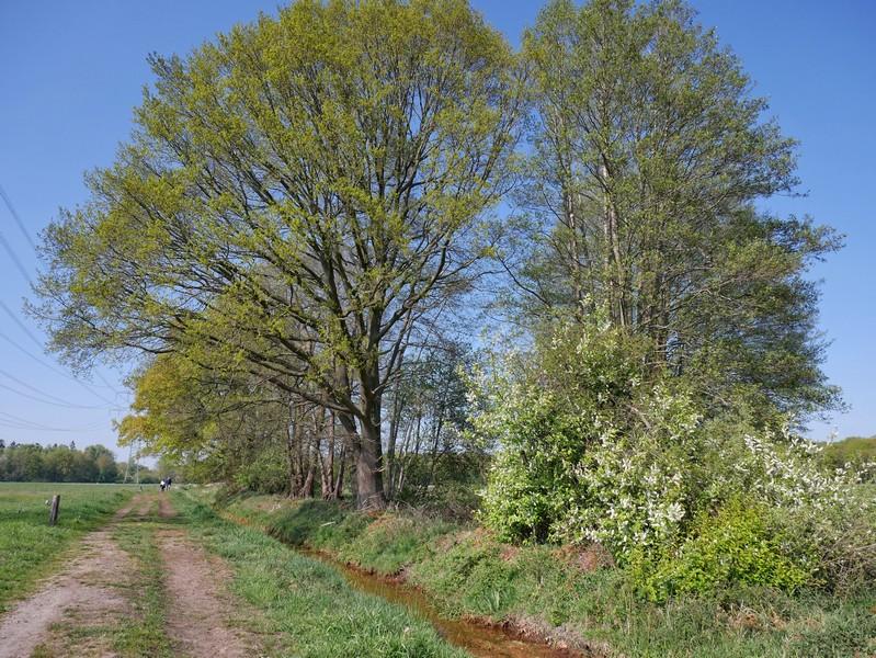 Dass eine Stromtrasse durch ein Naturschutzgebiet führt, ist sicher ungewöhnlich, aber sie ist vermutlich vor 1983 entstanden.