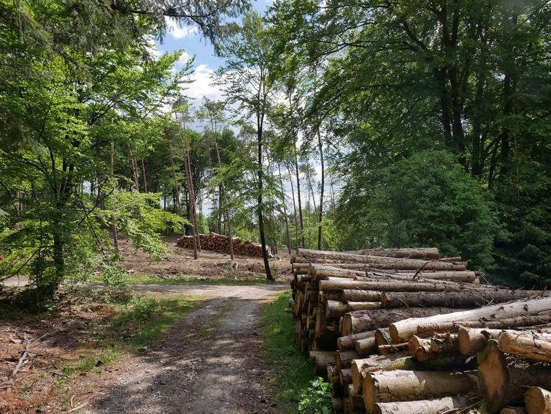 Holzduft liegt ebenfalls in der Luft - das liegt leider an den durch den Borkenkäfer bedingten Rodungen.