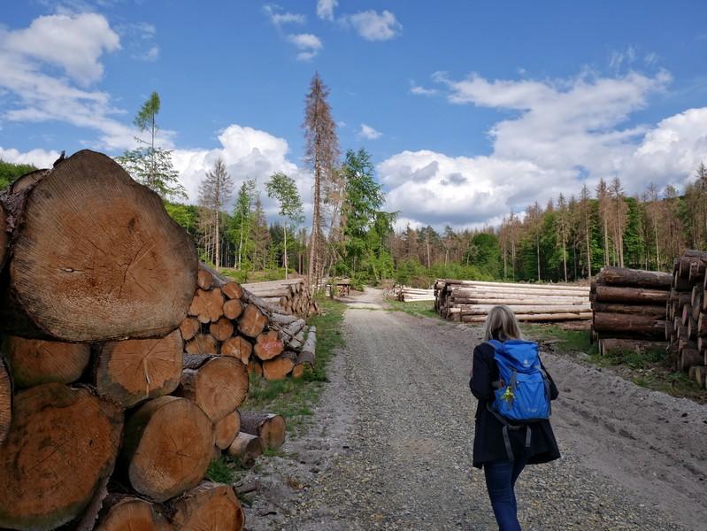 Mehr Holz als auf dem Holzweg geht wirklich nicht.