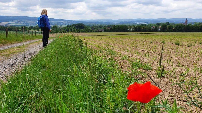 Wir gehen weiter zwischen Feldern und folgen weiter dem Weserberglandweg.