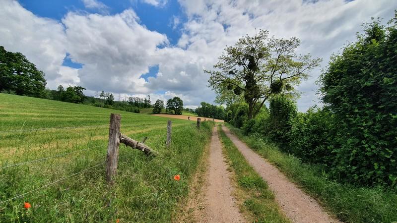 Zwischen Feld und Wald führt uns der Weserberglandweg.