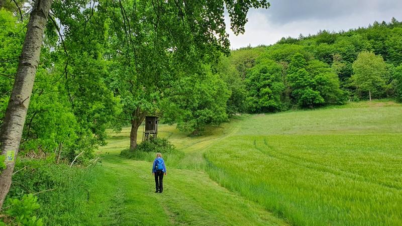 Wir wandern durch sattes Grün.