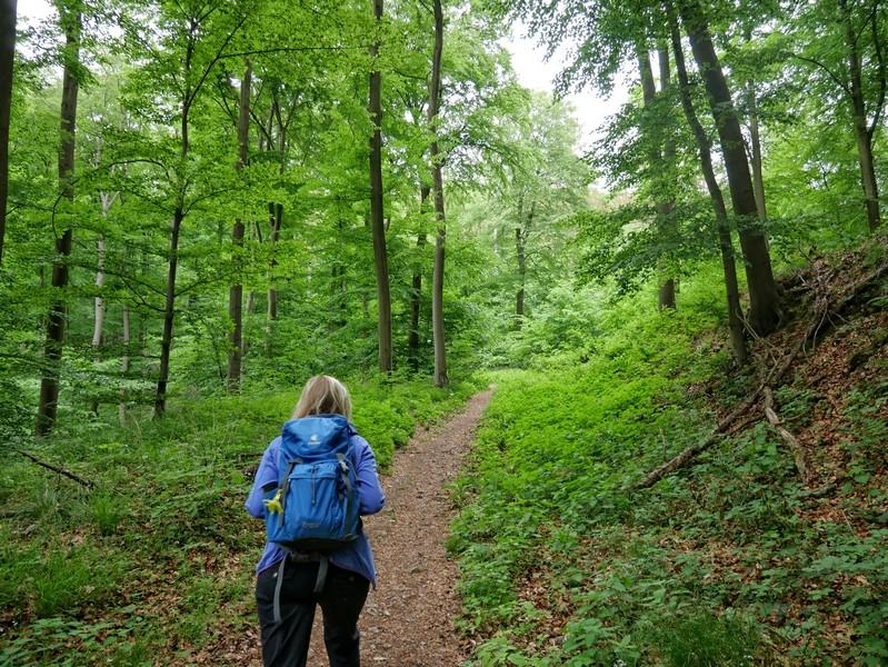 Auf kleinen Pfaden führt uns der Weserberglandweg hinauf zur Osterburg.