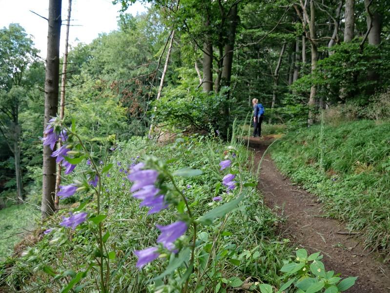 Auch auf dem Kamm des Wesergebirges entdecken wir reichlich abwechslungsreiche Flora.