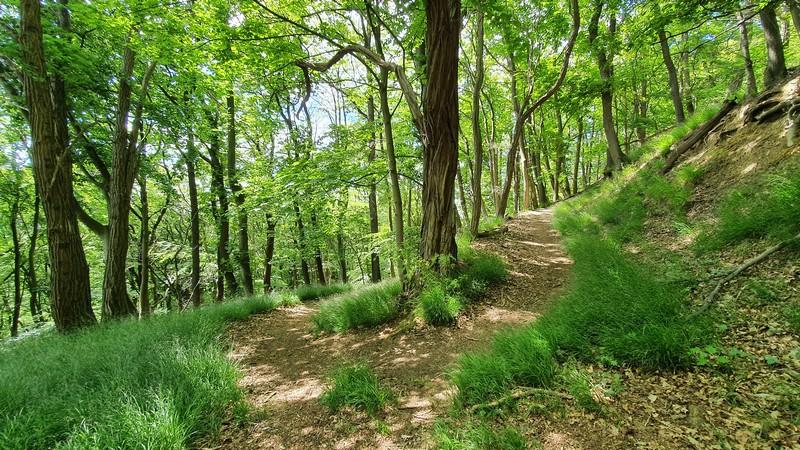 Enge Serpentinen schrauben sich hier den Hang des Wiehengebirges hoch.