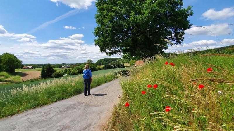 An sonnigen Sommertagen kann es auf dem Panoramaweg Borgholzhausen recht heiß werden, denn Schatten wird uns auf dem Weg nur selten geboten.