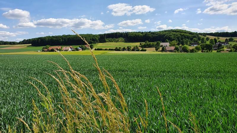 Auch hier bleiben uns hübsche Ausblicke erhalten - der Panoramaweg Borgholzhausen überzeugt auf ganzer Linie.