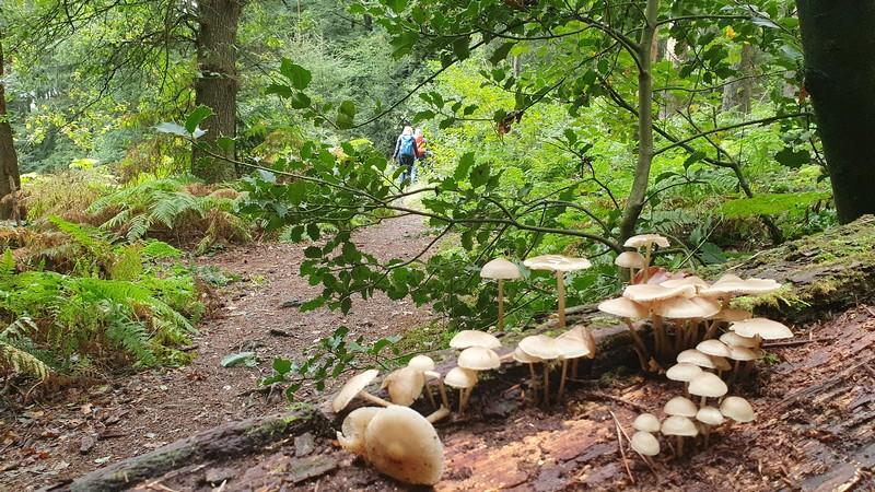 Neben den verschiedensten Baumsorten gedeihen hier auch Pilze besonders zahlreich.