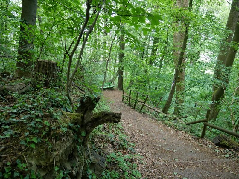 Über hübsche Waldwege führt uns der A2 schließlich recht steil bergab zurück zum Parkplatz Unterm Willem.